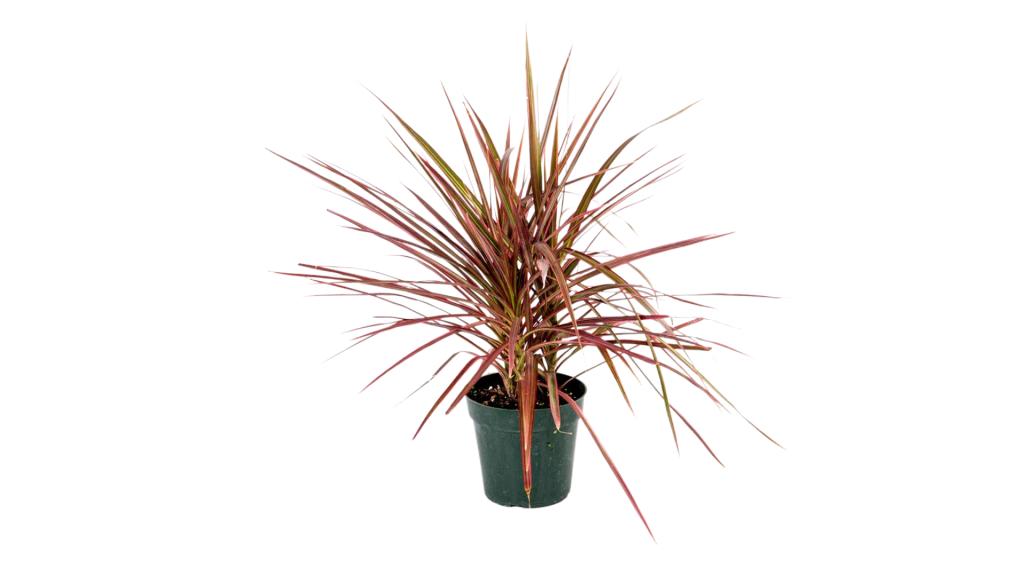 American Plant Exchange best winter indoor plants