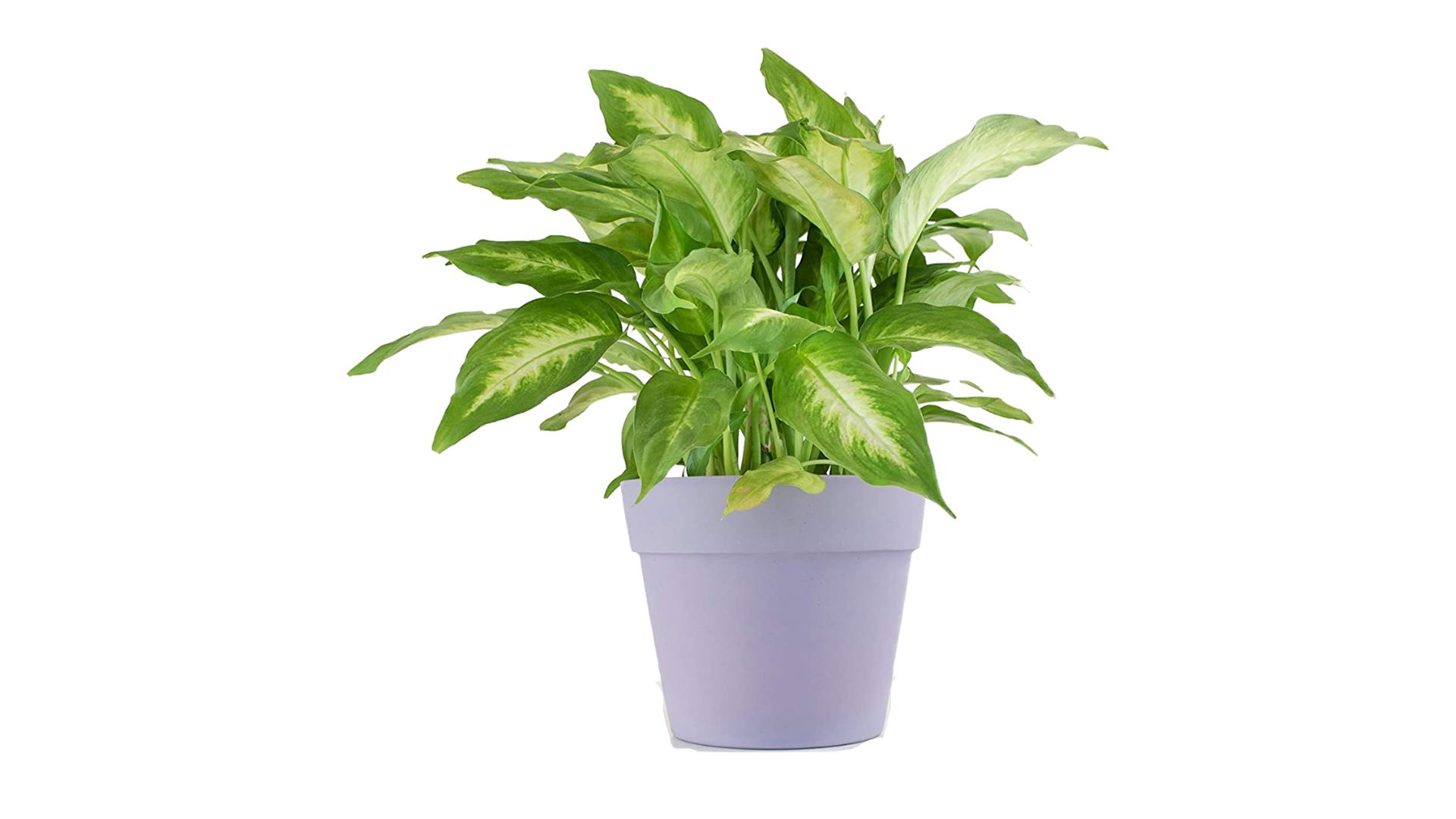 Leaf & Linen best winter indoor plants (7)