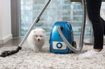 cute fluffy white dog sitting next to a blue canister vacuum