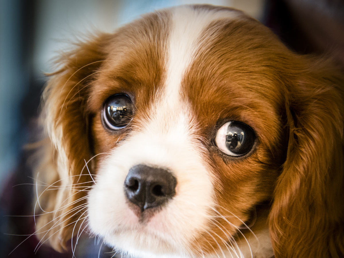 The Truth About 'Puppy Eyes' And Why They're So Cute