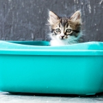 Fluffy tabby kitten sitting in a brightturquoise litter box