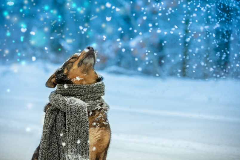 How to Keep Your Pet Warm in the Bitter Cold