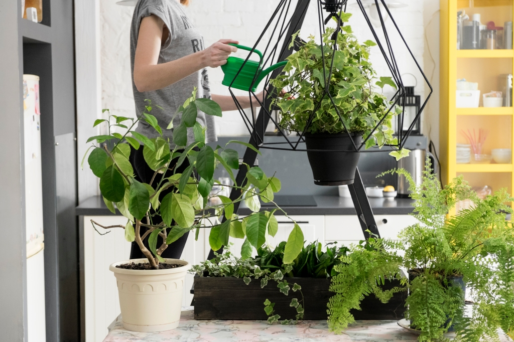 Mid section of woman watering hanging ivy plant in kitchen