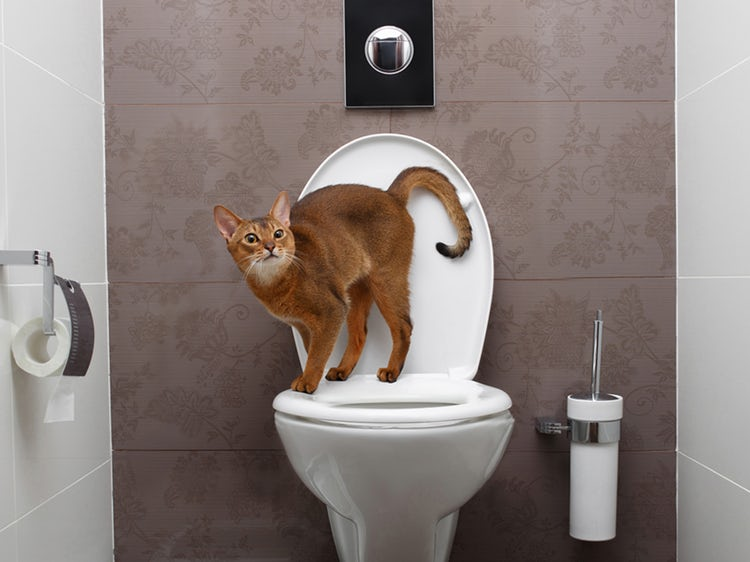 Why Do Cats Follow You Into the Bathroom?