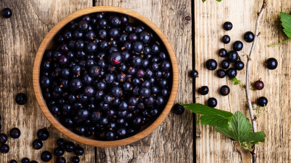 Black currant berries