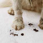 dog muddy paws