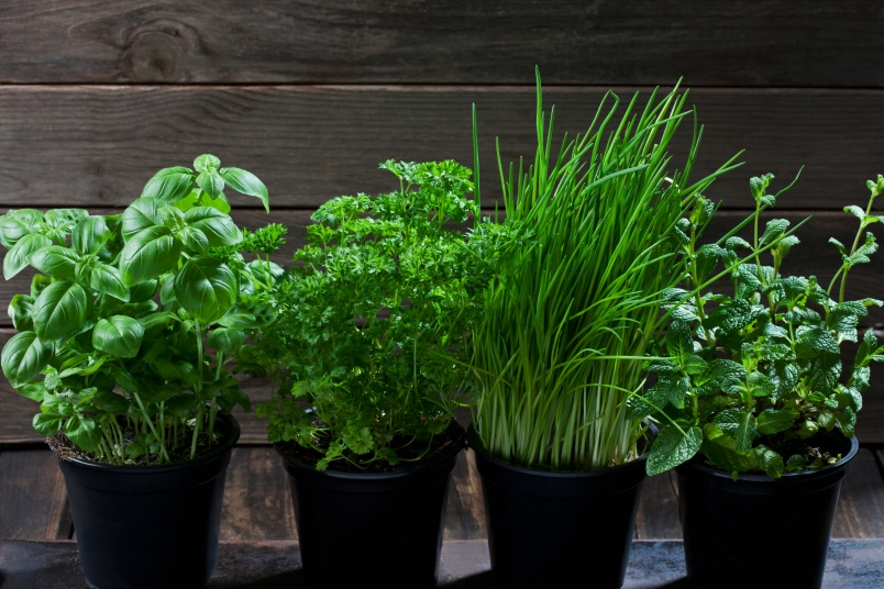 5 Tips on How to Grow Your Own Herbs In Your Home