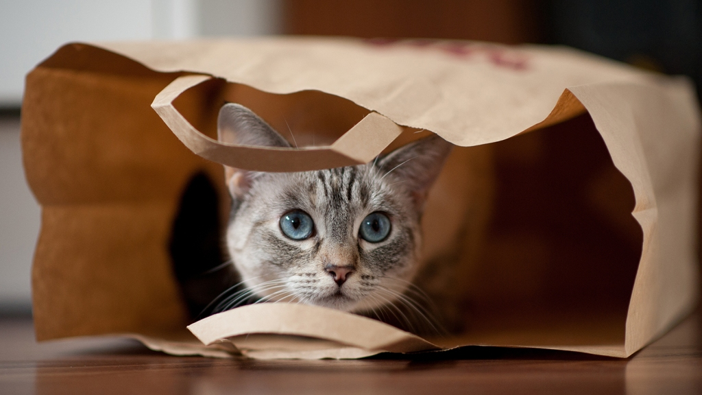 Gray cat in paper bag