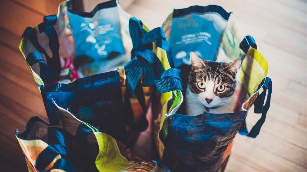 Tabby cat in grocery bags