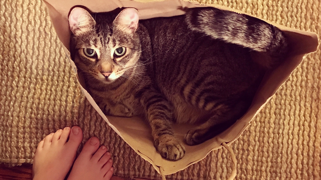 Tabby cat curled up inside paper bag