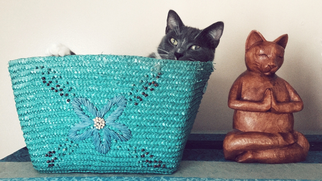 Black and white cat in blue straw bag
