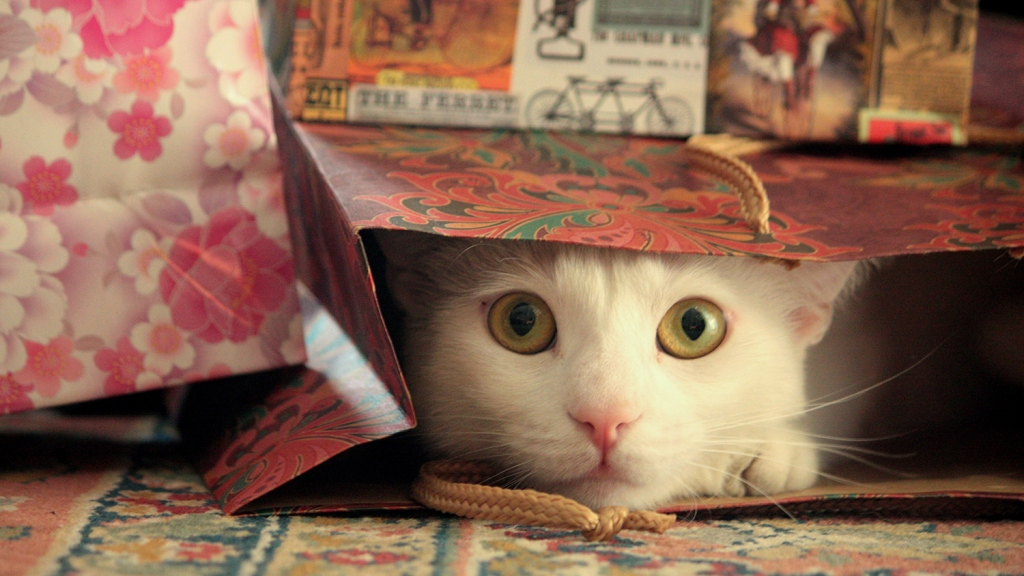 White cat poking head out of gift bag