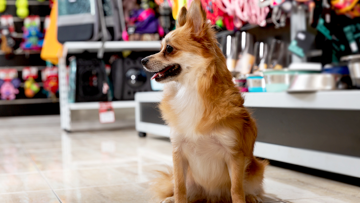 Veterinarian Reveals the Popular Toys and Treats You Should Never Give Your Dog