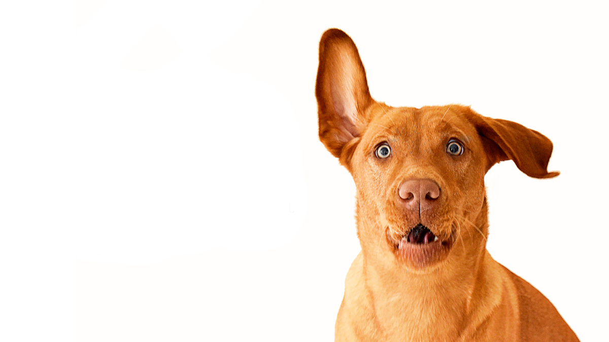8 Unexpected Things Your Dog Can Sense