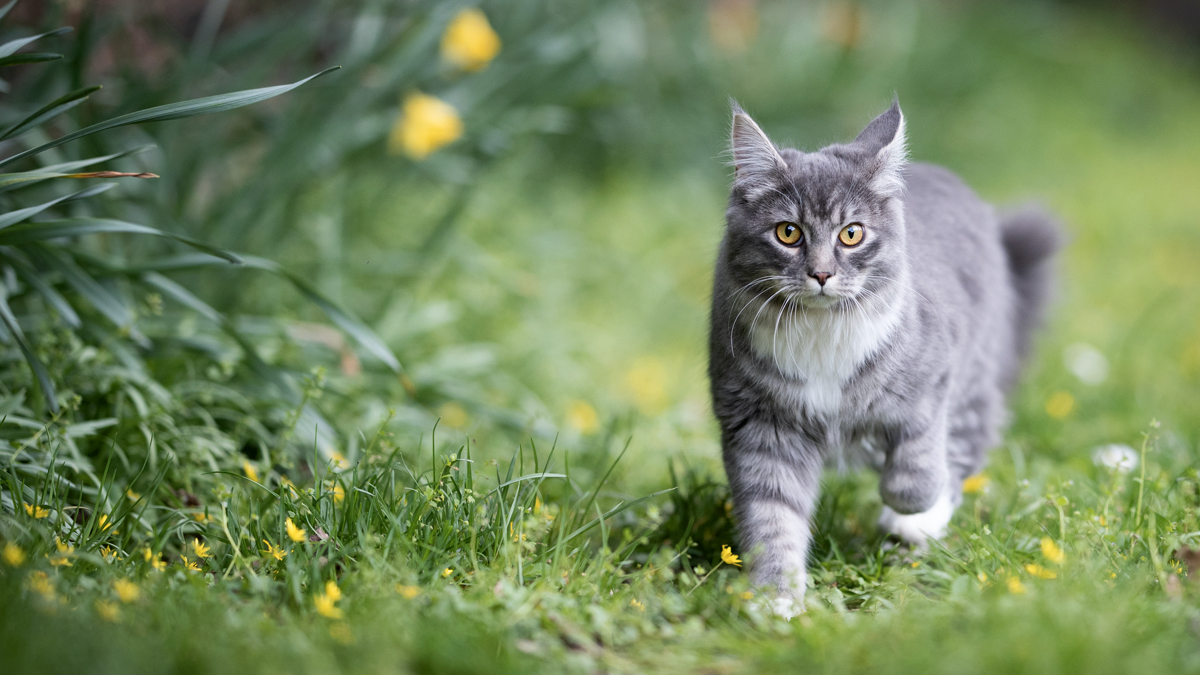 2 Simple Tricks to Stop Cats From Going to the Bathroom on Your Yard