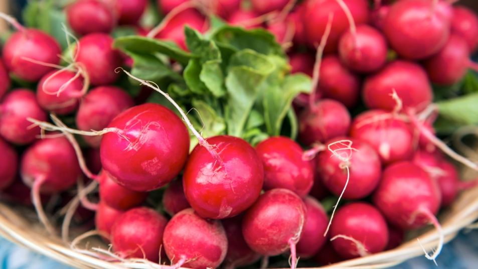 Bunches of radishes
