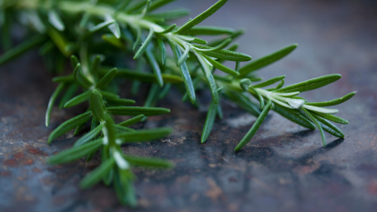 rosemary-inflammation-cancer-brain-aging