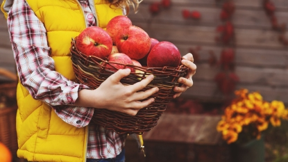 girl carrying basket of apples