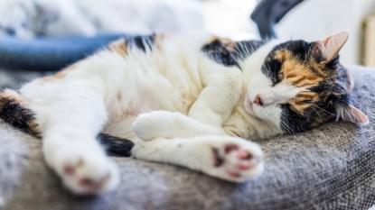 cat-shedding-lint-roller