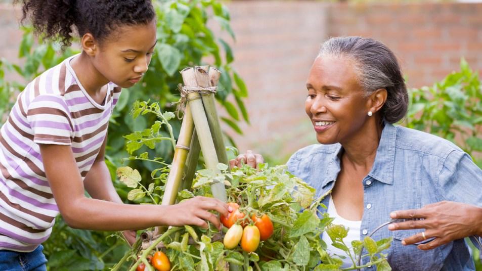 How to maintaian a veggie garden
