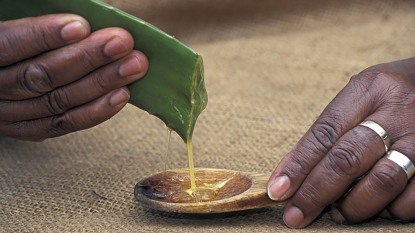 woman squeezing out aloe vera gel