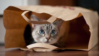 kitten in a paper bag